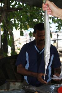 11_11_India12 Kochi 2029