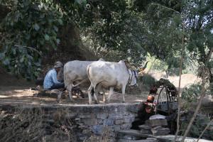 11_11_India3 Ranakpur 0606