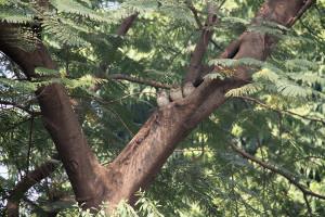 11_11_India5 Agra 0922