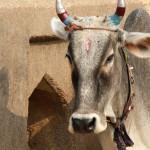 11_11_India6 Orchha 1054