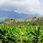 Banan-ultetveny-hegyekkel