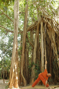 Yoga near Baniyan Tree 2